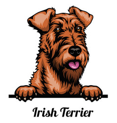 Irish terrier - color head dog - stock vector