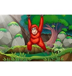 Orangutan in forest vector