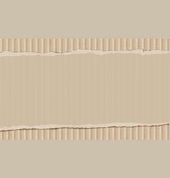 sheet torn cardboard vector image