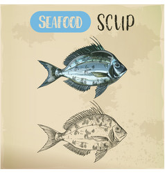 Side view on scup or porgy fish seafood sketch vector