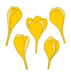 yellow spring crocus flowers icon set vector image