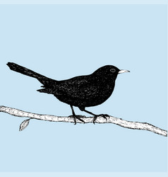 blackbird pen drawing vector image
