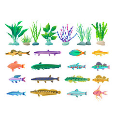 Various algae and marine creatures vector