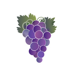 a bunch of purple grapes vector image