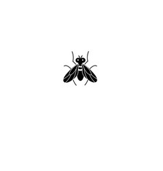Graphics silhouette fly icon vector