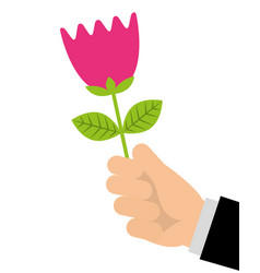 hand of man holding tulip flower romantic gift vector image