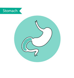 Isolated of stomach vector