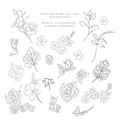 Line drawing botanicals flowers plants vector