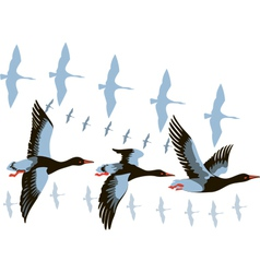 Wild geese in flight vector