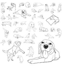 Drawing set of adorable beagle dog vector image