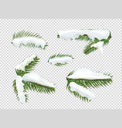 Green pine tree branches with snow clipart vector