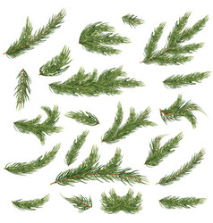 Set of fir branches christmas tree vector
