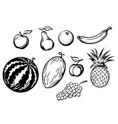 Set of fresh fruits icons vector image