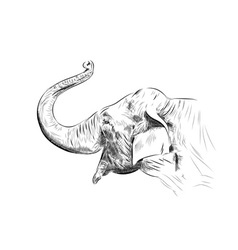 sketch of elephant on the white vector image vector image