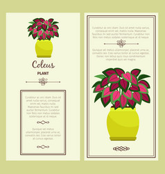 greeting card with coleus plant vector image