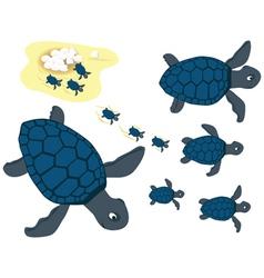 Blue turtles vector