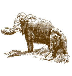 Engraving of two woolly mammoths vector