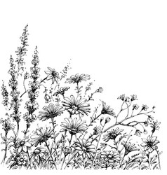 Field flowers sketch vector