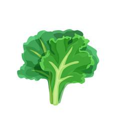 Green lettuce salad in bright color cartoon flat vector