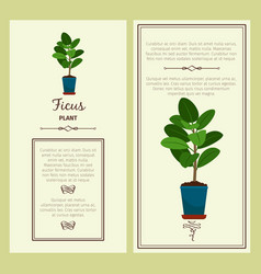 greeting card with ficus plant vector image
