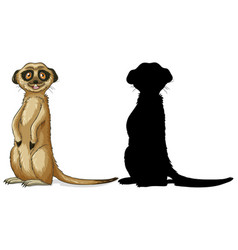 set meerkat characters and its silhouette on vector image