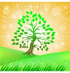 Summer Green Tree vector image