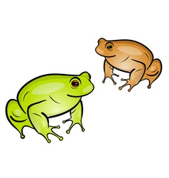 frog isolated on the white vector image