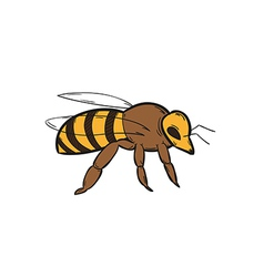 one bee vector image