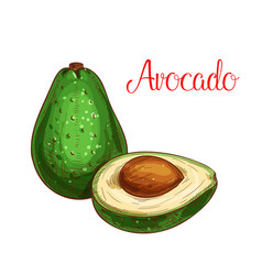 Avocado tropical fruit sketch icon vector