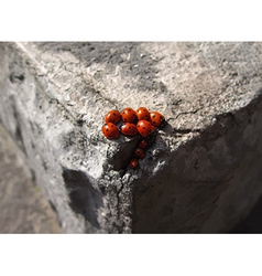 Family of ladybugs vector