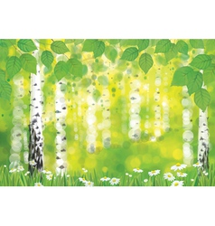 forest spring vector image