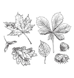 hand drawing leaves 10 vector image