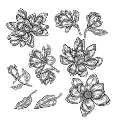 Hand drawn spring magnolia flowers and leaves vector
