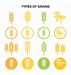 Types of grains cereals icons - wheat rye barle vector