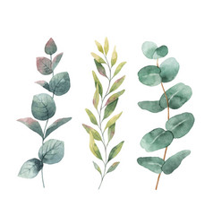 watercolor hand painted set with eucalyptus vector image