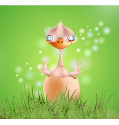Baby chick vector