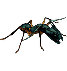 Cartoon ant warrior vector