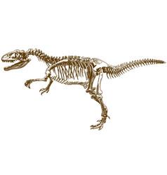 engraving tyrannosaurus skeleton vector image