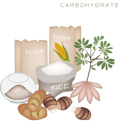Health and Nutrition Benefits of Carbohydrate Foo vector image