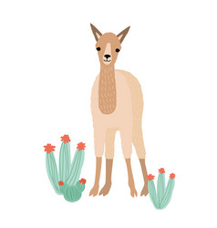 lovely llama cria or alpaca isolated on white vector image