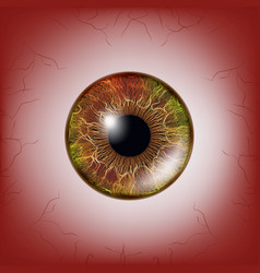 red eye scary bloody realistic eyeballs spooky vector image