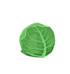 Healthy food cabbage vector