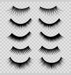 realistic detailed 3d feminine black lashes set vector image vector image