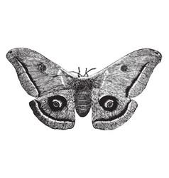 American silkworm moth vintage vector