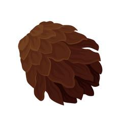 Brown pine cone woody fruit of conifer tree vector