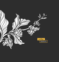 Coffee branch white vector