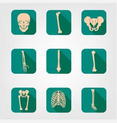 human bones icons vector image