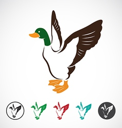 Image of an wild duck vector