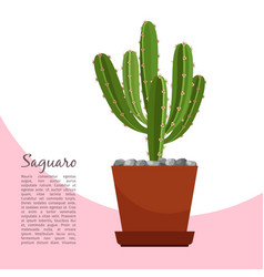 Saguaro indoor plant in pot banner vector