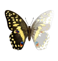 Butterfly Papilio Demodocus Unfinished Watercolor vector
